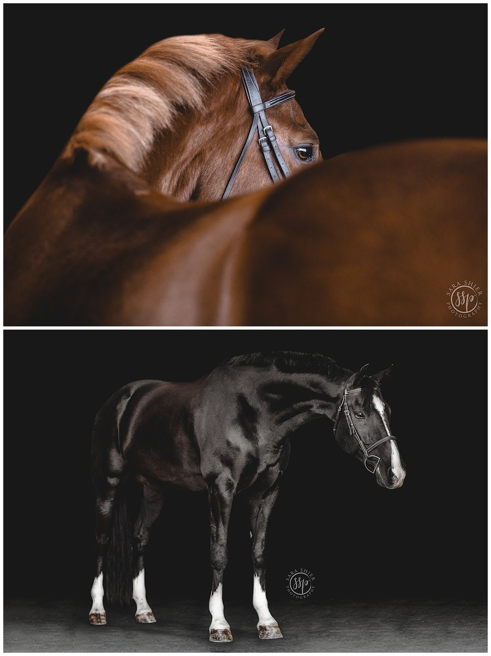 Black Background Horse Rider Equine Photographer Southern California Sara Shier Photography SoCal Equestrian Cowgirl_0220.jpg