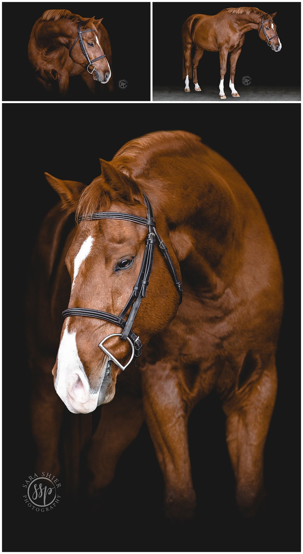 Black Background Horse Rider Equine Photographer Southern California Sara Shier Photography SoCal Equestrian Cowgirl_0219.jpg