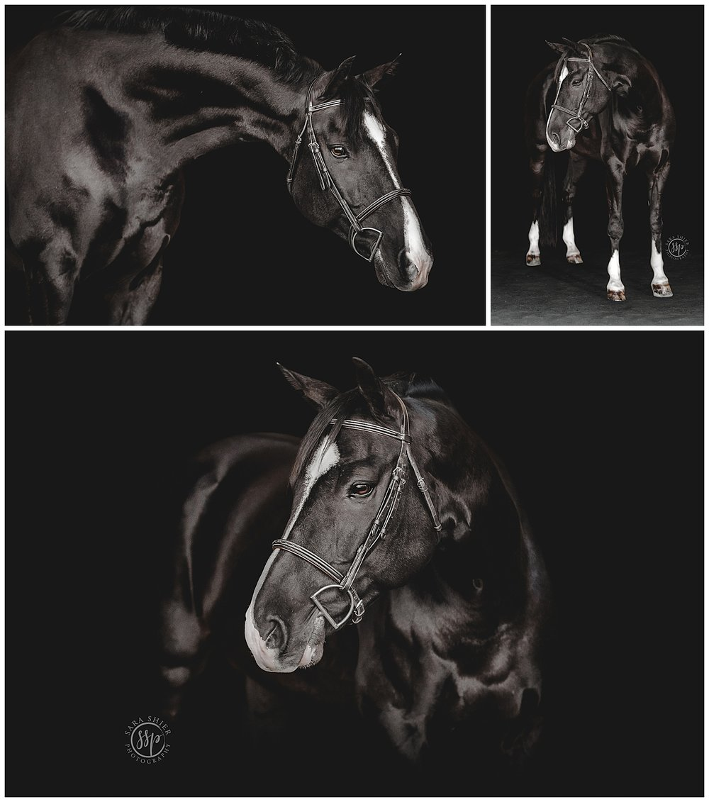 Black Background Horse Rider Equine Photographer Southern California Sara Shier Photography SoCal Equestrian Cowgirl_0221.jpg