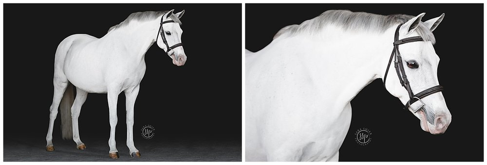Black Background Horse Rider Equine Photographer Southern California Sara Shier Photography SoCal Equestrian Cowgirl_0223.jpg