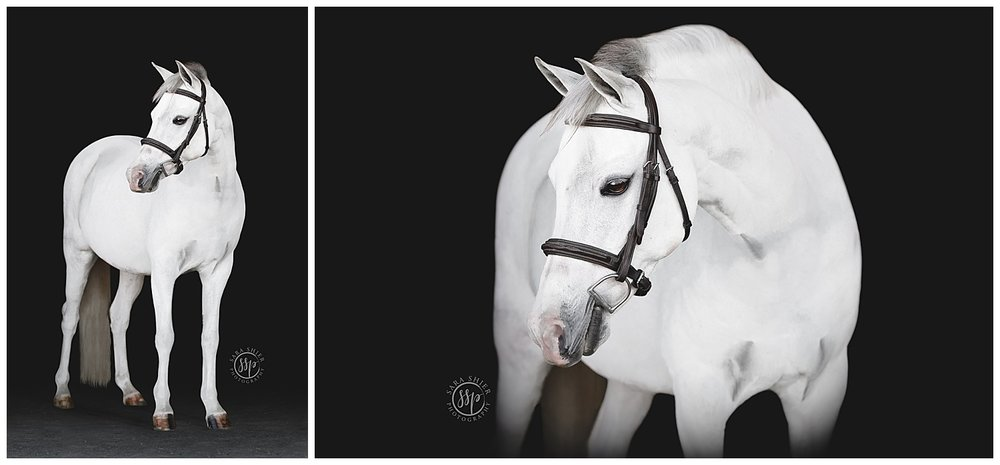 Black Background Horse Rider Equine Photographer Southern California Sara Shier Photography SoCal Equestrian Cowgirl_0224.jpg