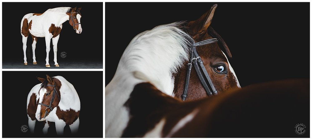 Black Background Horse Rider Equine Photographer Southern California Sara Shier Photography SoCal Equestrian Cowgirl_0225.jpg