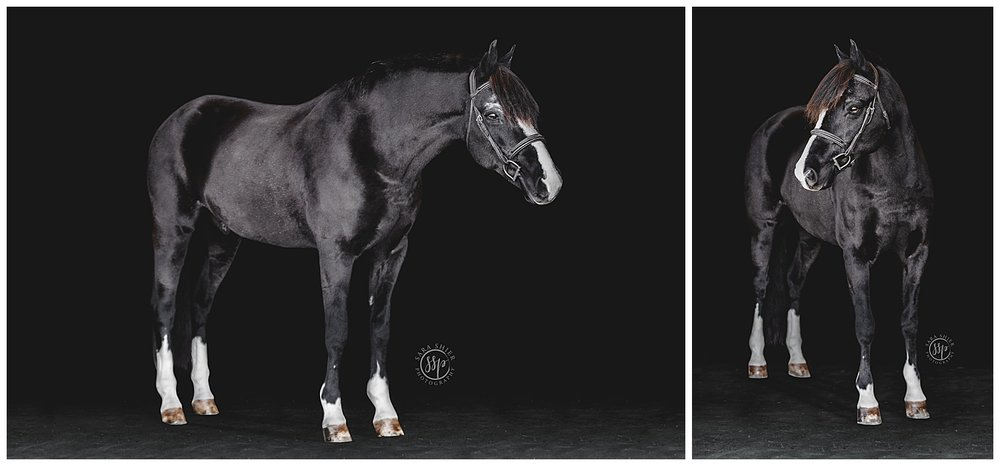Black Background Horse Rider Equine Photographer Southern California Sara Shier Photography SoCal Equestrian Cowgirl_0226.jpg