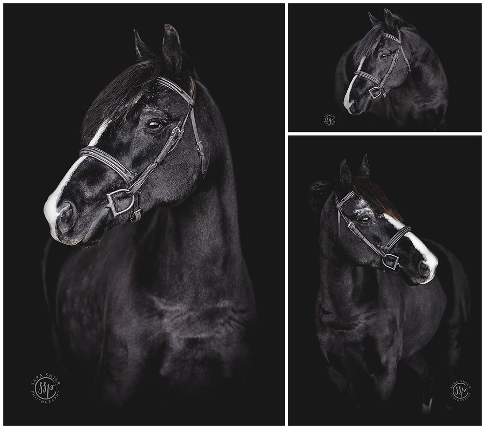 Black Background Horse Rider Equine Photographer Southern California Sara Shier Photography SoCal Equestrian Cowgirl_0227.jpg