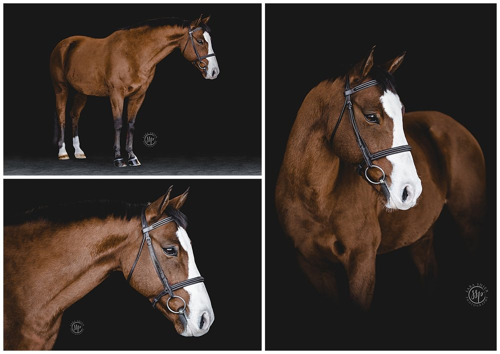 Black Background Horse Rider Equine Photographer Southern California Sara Shier Photography SoCal Equestrian Cowgirl_0229.jpg