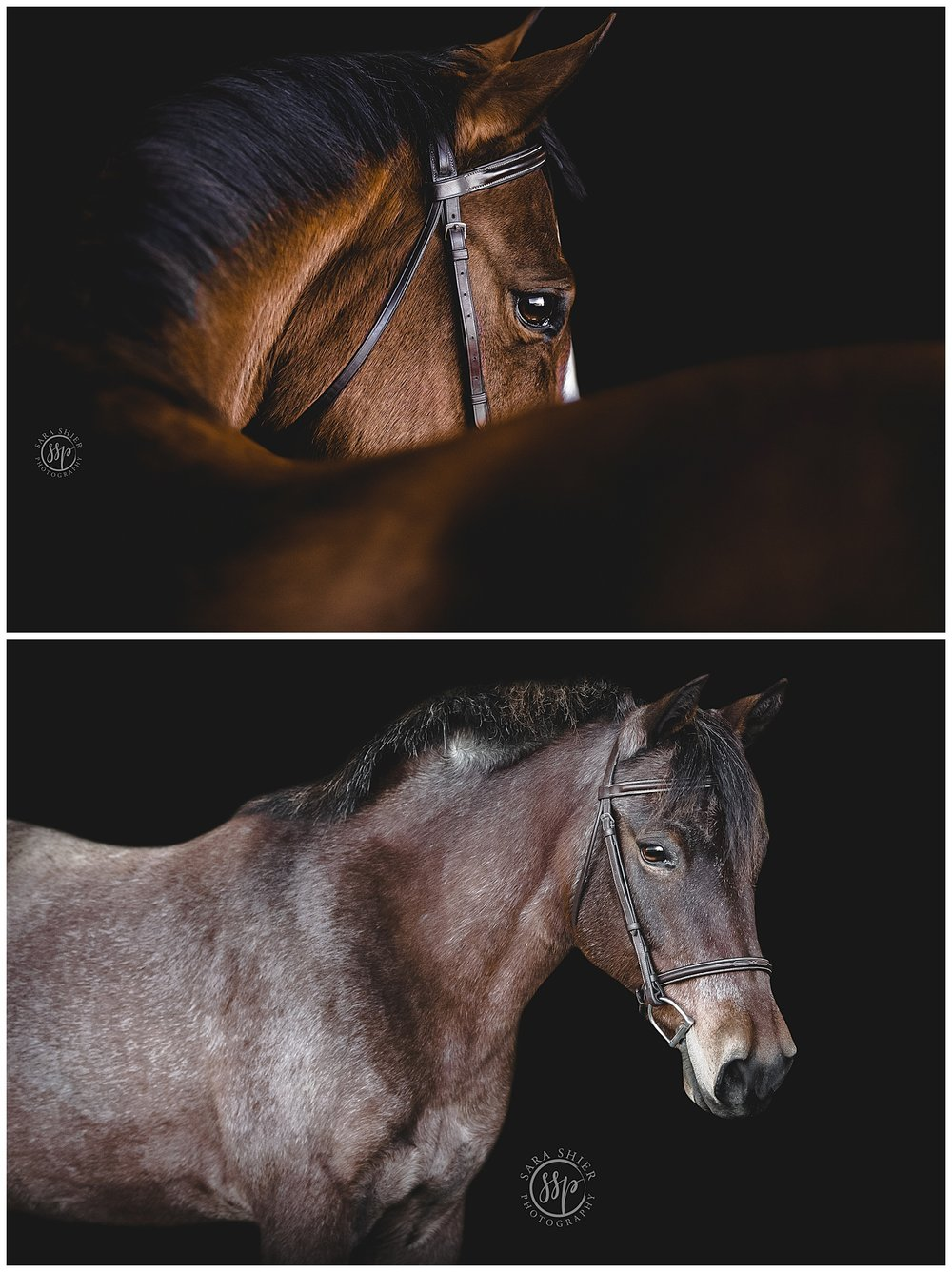 Black Background Horse Rider Equine Photographer Southern California Sara Shier Photography SoCal Equestrian Cowgirl_0230.jpg