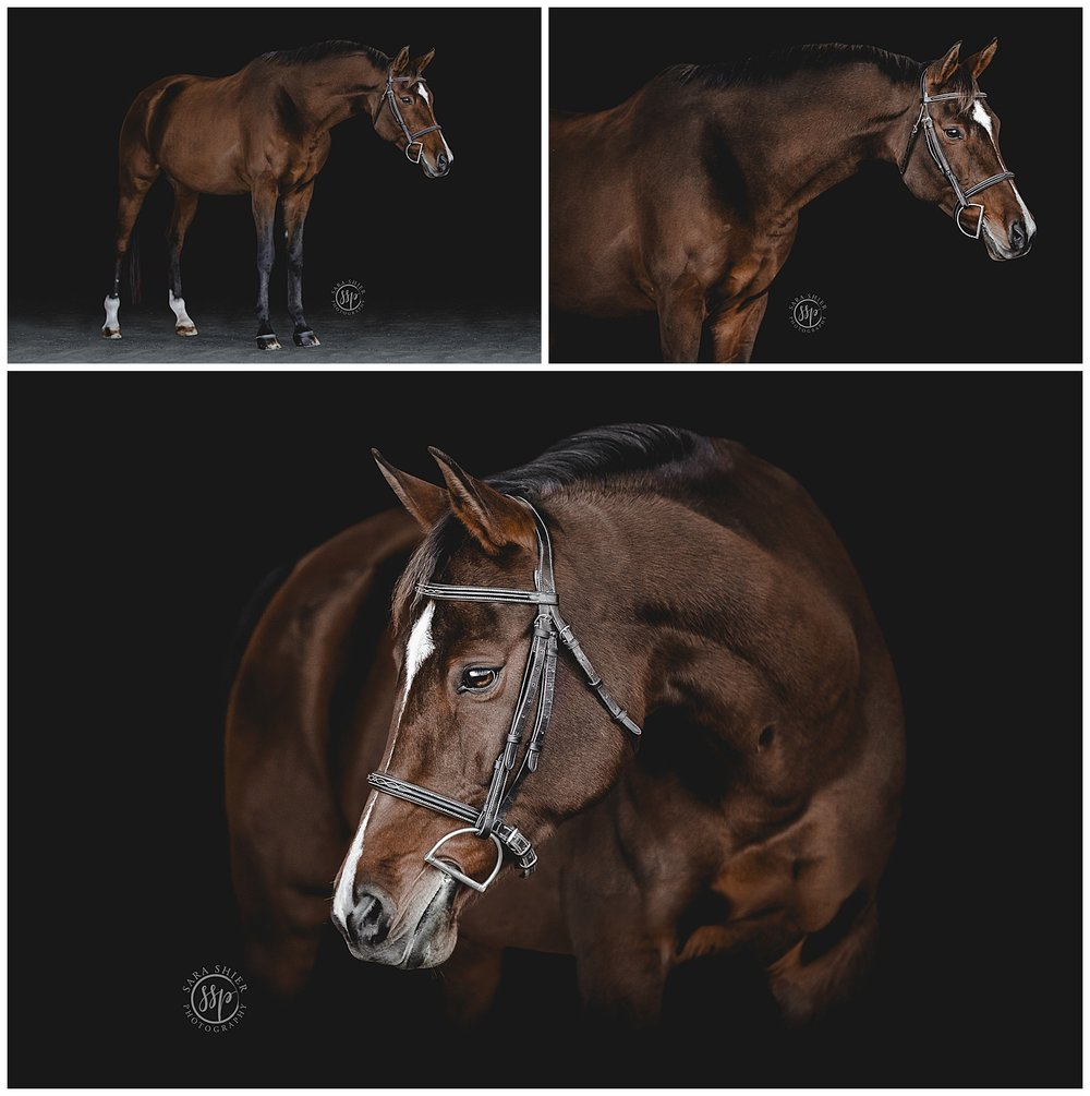 Black Background Horse Rider Equine Photographer Southern California Sara Shier Photography SoCal Equestrian Cowgirl_0232.jpg