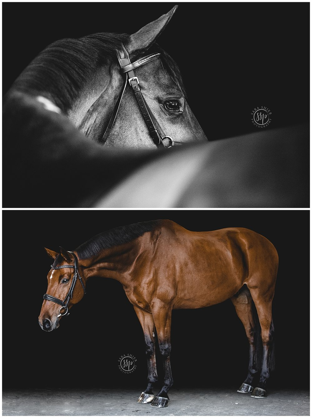 Black Background Horse Rider Equine Photographer Southern California Sara Shier Photography SoCal Equestrian Cowgirl_0255.jpg