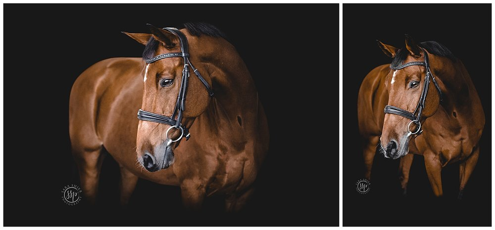 Black Background Horse Rider Equine Photographer Southern California Sara Shier Photography SoCal Equestrian Cowgirl_0256.jpg