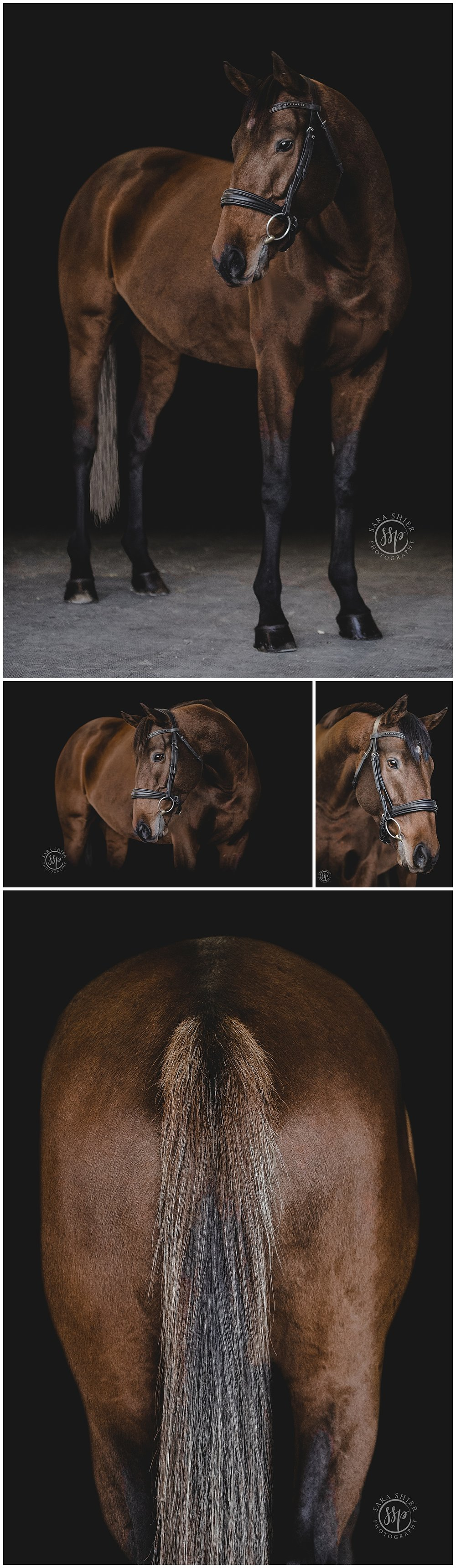 Black Background Horse Rider Equine Photographer Southern California Sara Shier Photography SoCal Equestrian Cowgirl_0252.jpg