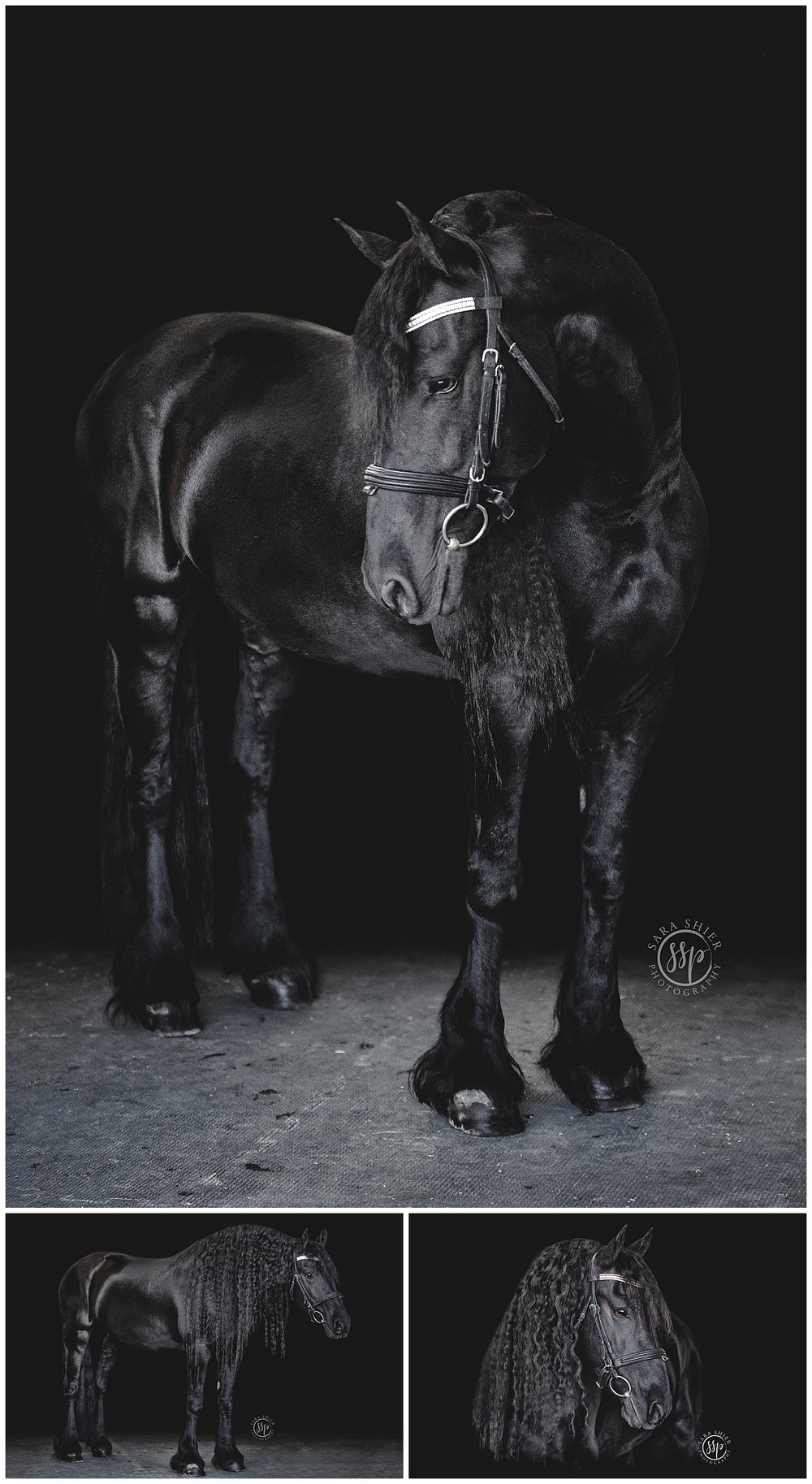 Black Background Horse Rider Equine Photographer Southern California Sara Shier Photography SoCal Equestrian Cowgirl_0257.jpg