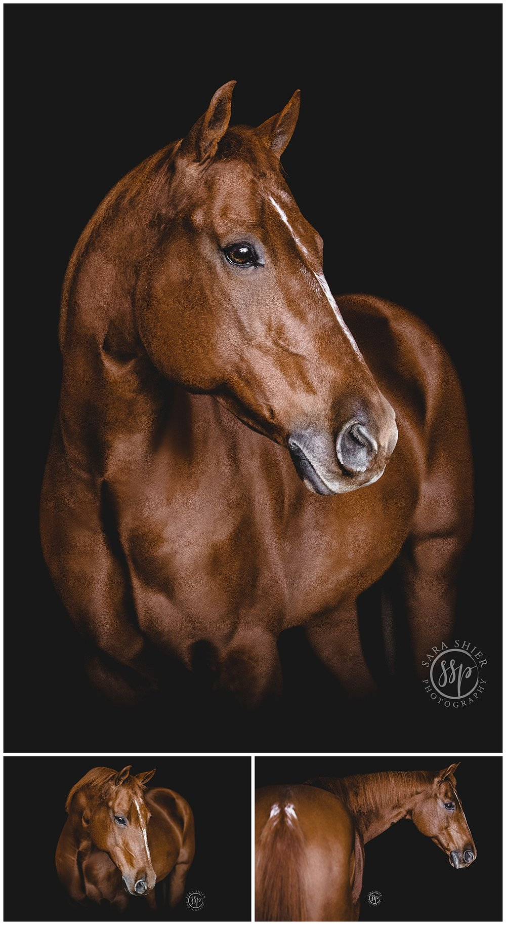 Black Background Horse Rider Equine Photographer Southern California Sara Shier Photography SoCal Equestrian Cowgirl_0337.jpg
