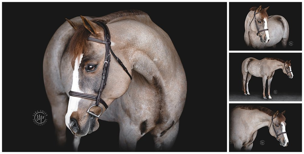 Black Background Horse Rider Equine Photographer Southern California Sara Shier Photography SoCal Equestrian Cowgirl_0436.jpg