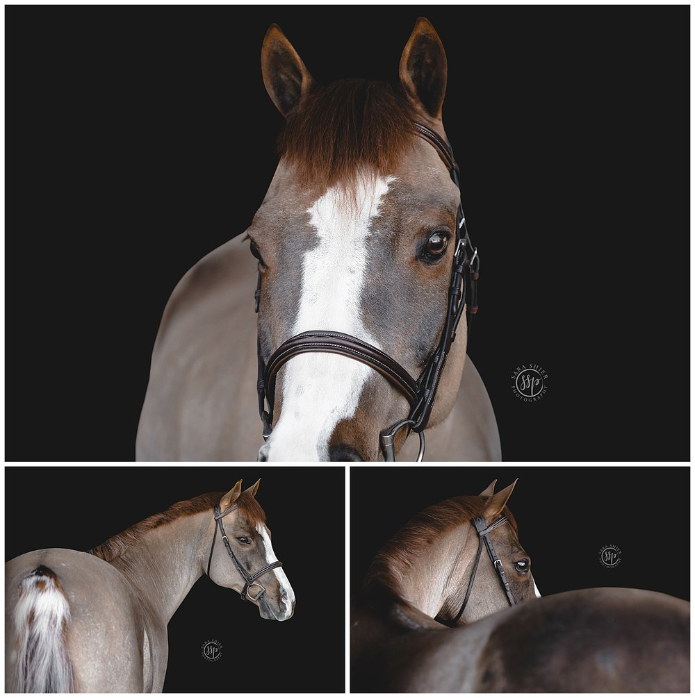 Black Background Horse Rider Equine Photographer Southern California Sara Shier Photography SoCal Equestrian Cowgirl_0437.jpg