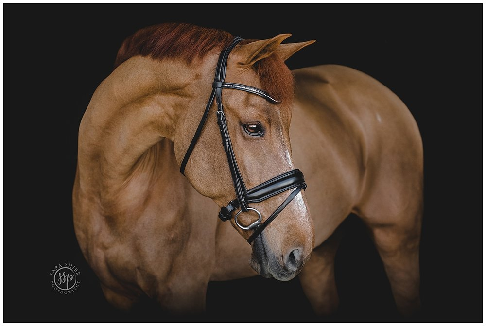 Black Background Horse Rider Equine Photographer Southern California Sara Shier Photography SoCal Equestrian Cowgirl_0438.jpg