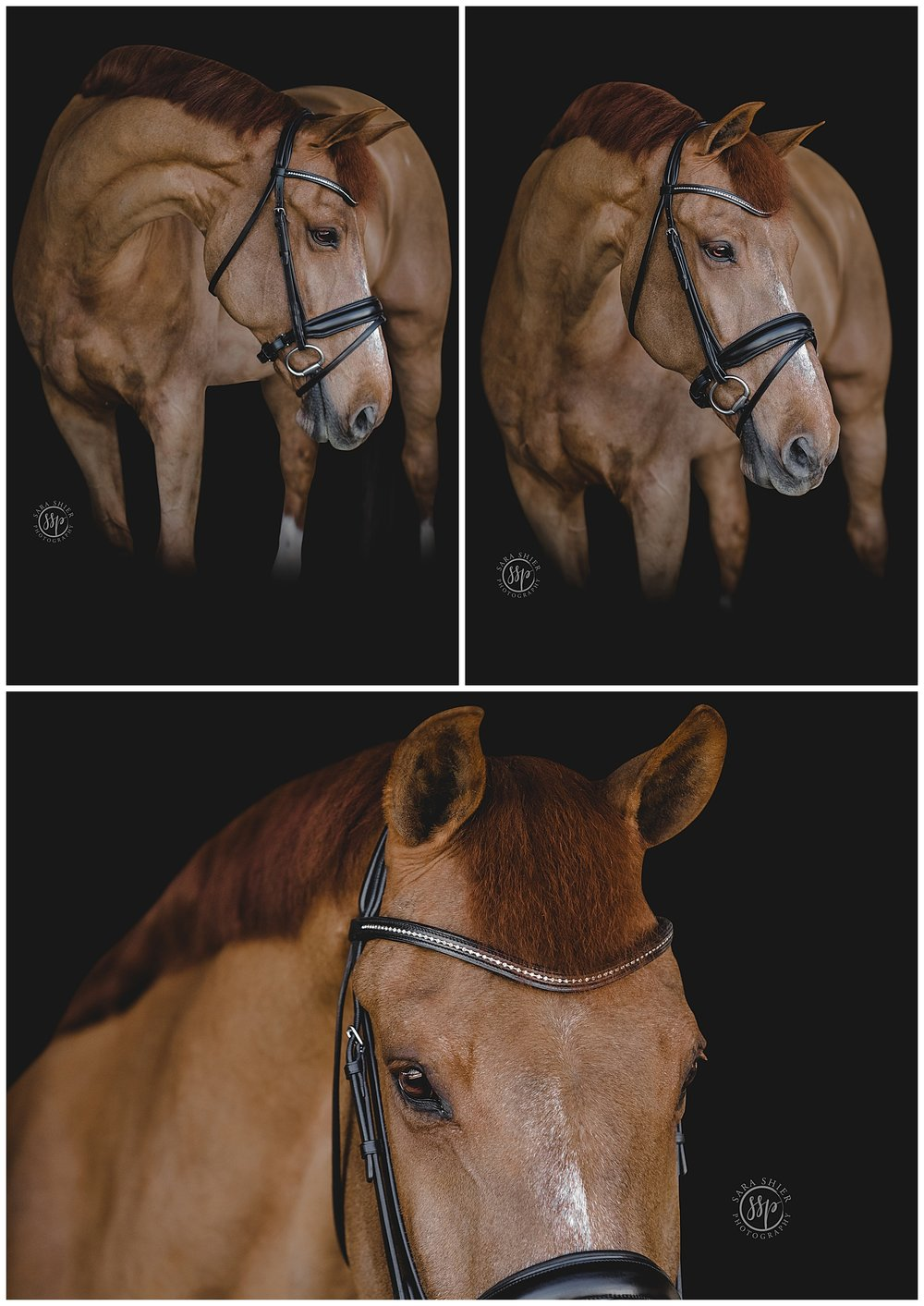 Black Background Horse Rider Equine Photographer Southern California Sara Shier Photography SoCal Equestrian Cowgirl_0439.jpg