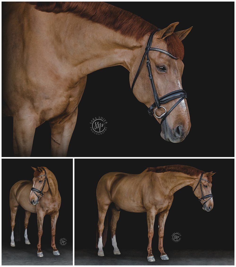 Black Background Horse Rider Equine Photographer Southern California Sara Shier Photography SoCal Equestrian Cowgirl_0440.jpg