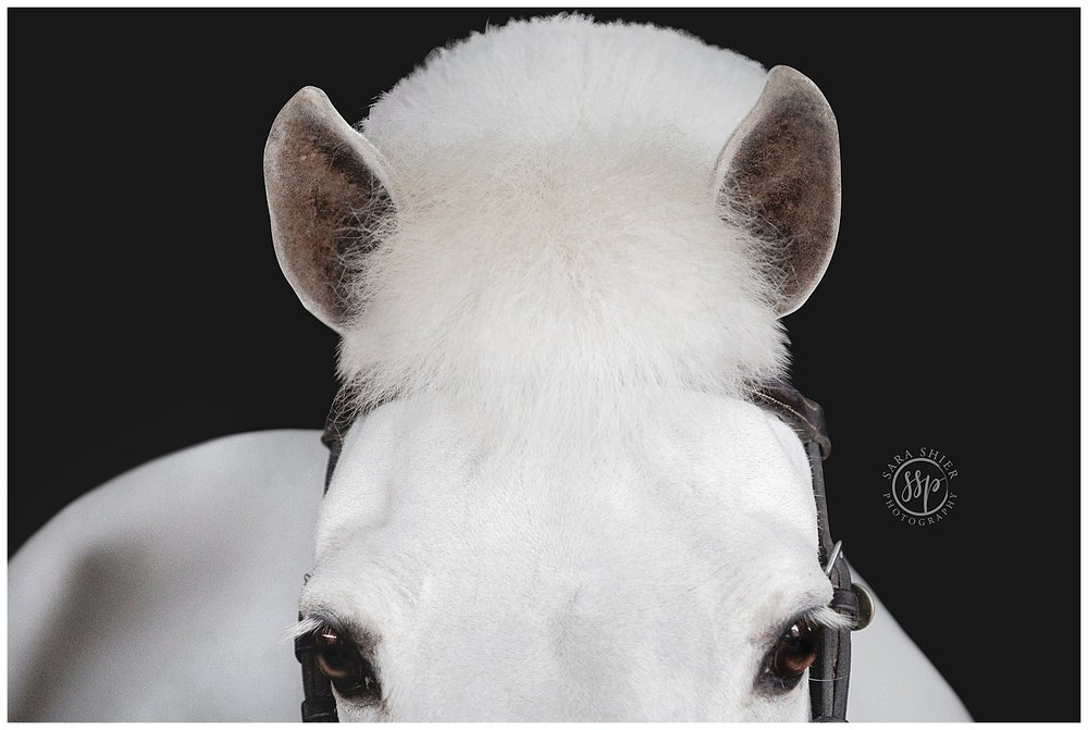 Black Background Horse Rider Equine Photographer Southern California Sara Shier Photography SoCal Equestrian Cowgirl_0441.jpg
