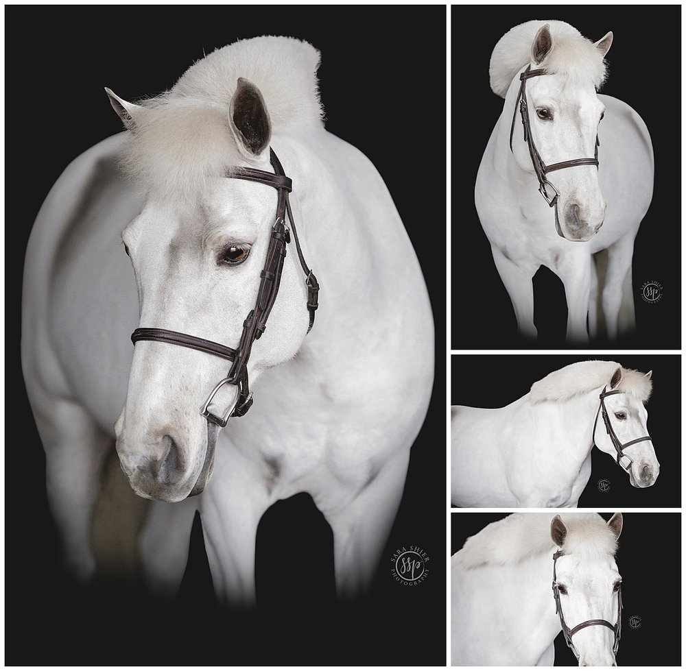 Black Background Horse Rider Equine Photographer Southern California Sara Shier Photography SoCal Equestrian Cowgirl_0443.jpg
