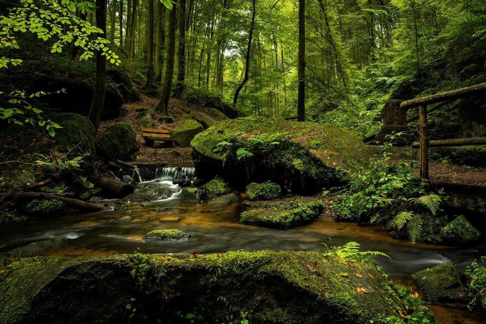 bench-cascade-creek-355321.jpg