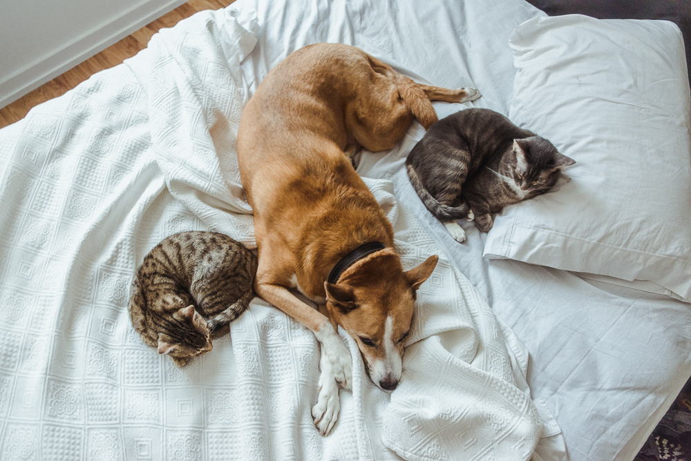 sacres-cats-2.jpg