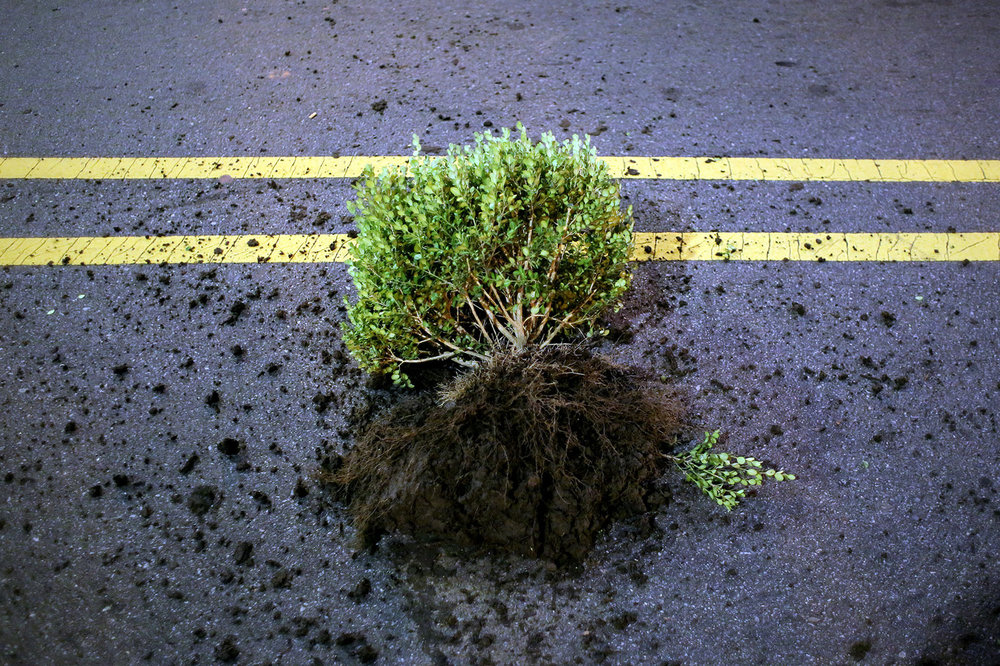 A shrub thrown by protesters toward riot police officers lies in the middle of East Trade Street, Sept. 21, 2016, in downtown Charlotte, North Carolina.