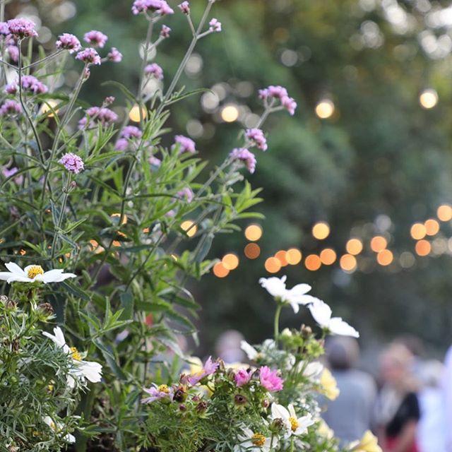 Let's just skip the entire day 🙆♀️ and head straight for the margaritas! 🙃 | 📷: @christinemcfaul . . . #margaritamonday 🍹 #mondaymotivation #inthegarden 🌿#elliesgardenjax #instagarden #summerstyle #igersjax #plants #flowers #gardenlights #iida #coctailcouture