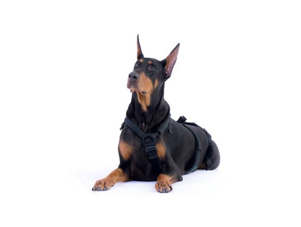dog models_dante.jpg