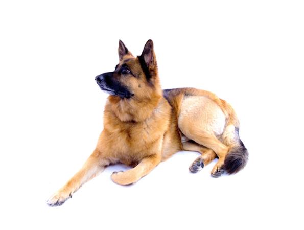 dog models_charlie.jpg