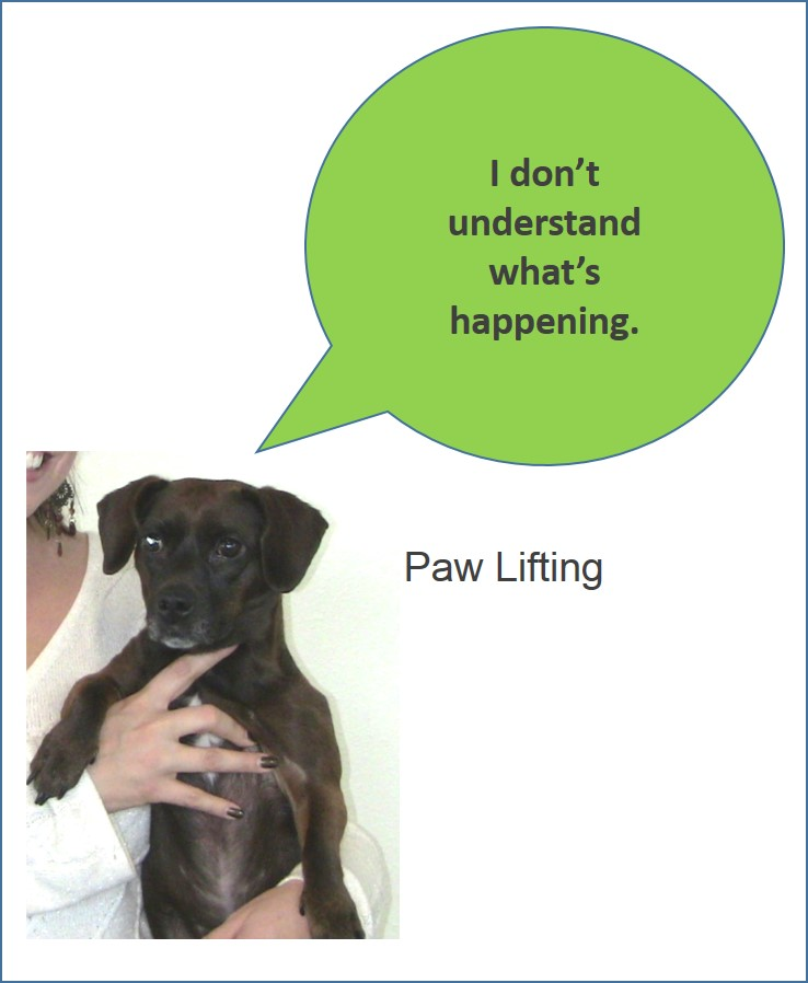 PawLifting.jpg
