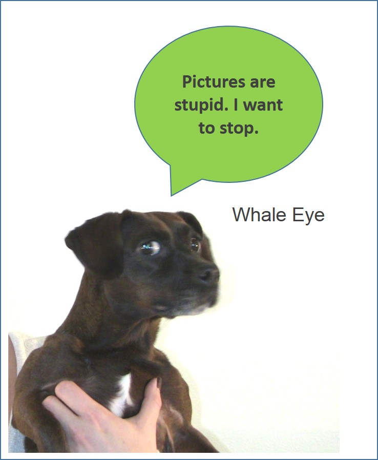 WhaleEye.jpg