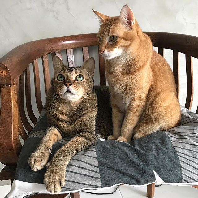 Happy weekend ! Yea .. can't help but smile whenever I see these two ... hard to believe that Simba will turn 16 years this year and Marble turned 11 last February ! They have been excellent companions and I consider them as family 💖 So grateful to have them in our lives 🙏🏼