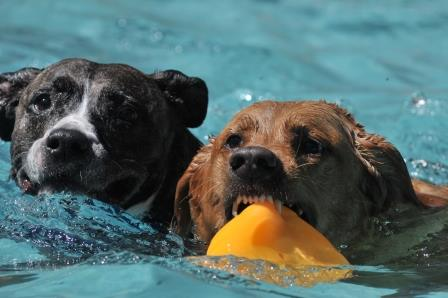 Dog Splash DaysSeptember 9-10, 2017 -