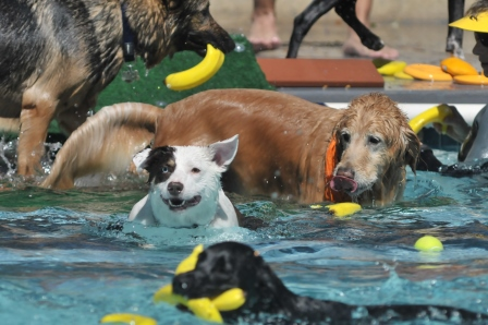 2018 Dog Splash Days - September 8 - 9 at the Templeton Community Pool