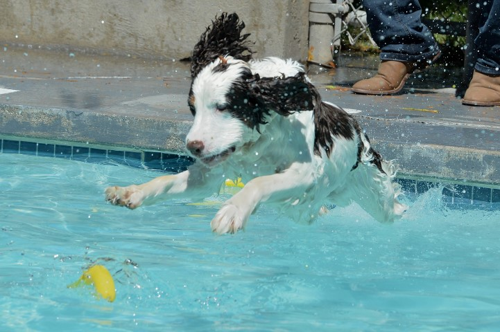 12th Annual Dog Splash Days September 8-9, 2018