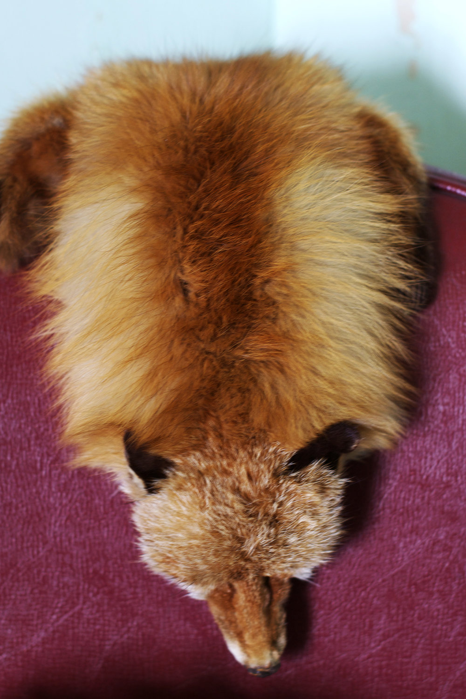 fox stole.jpg