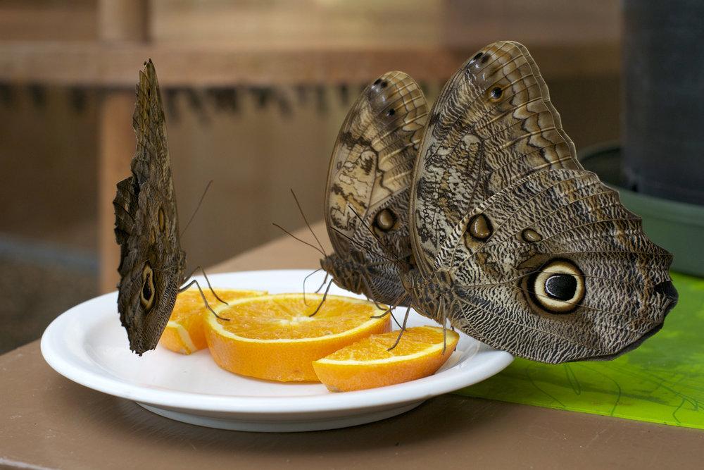 butterflies-on-orange.jpg