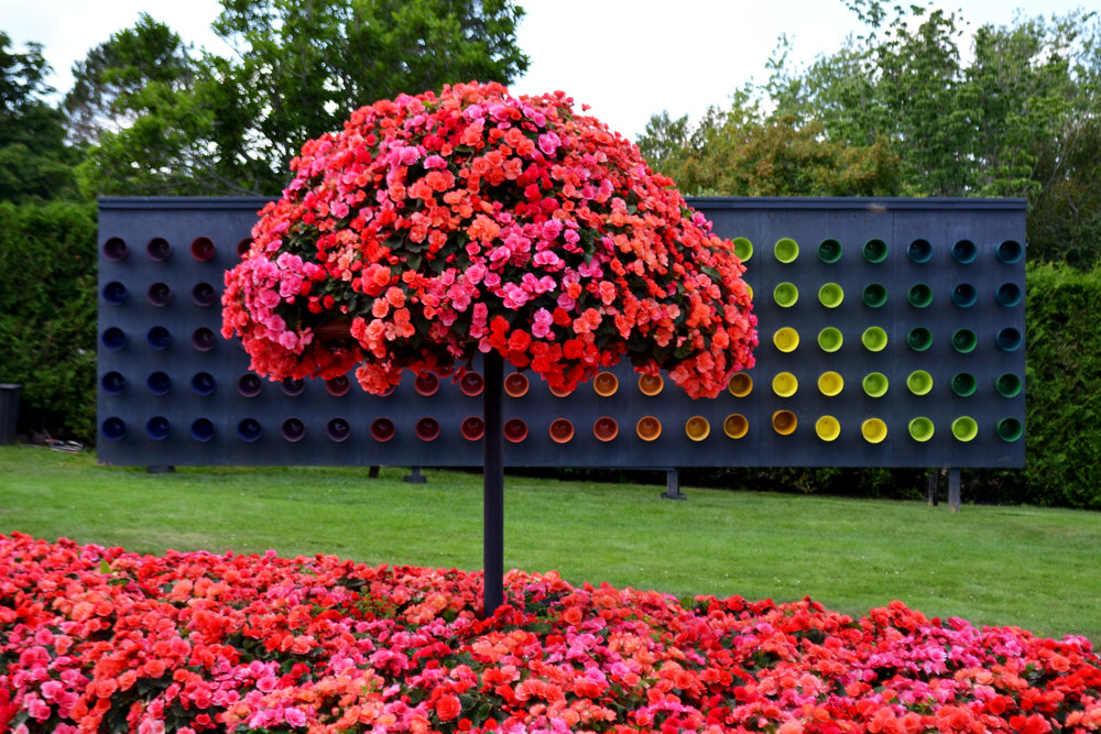 begonia-pink-tree-against-colourful-sculpture.jpg