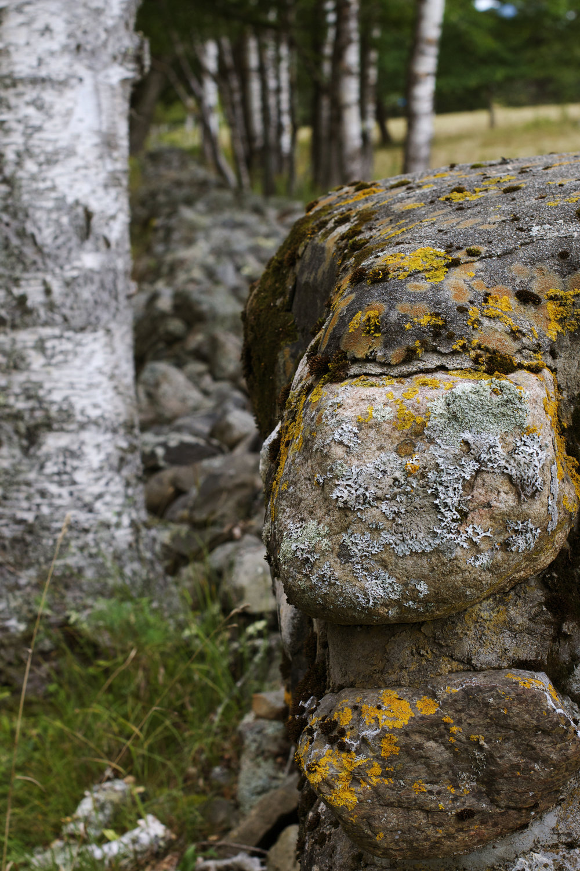 stone-wall-longview.jpg