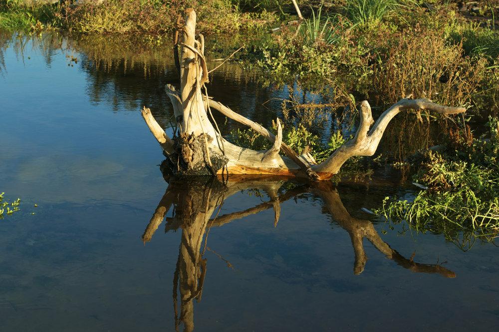 driftwood-reflection.jpg