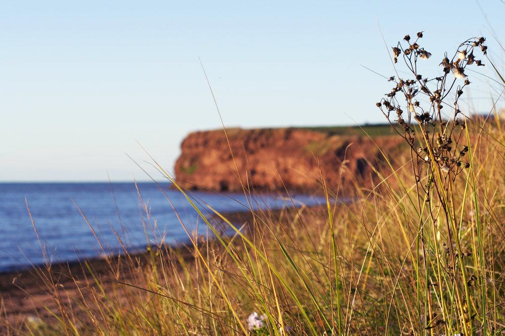looking-through-wheatfield-to-cape-cliffs.jpg