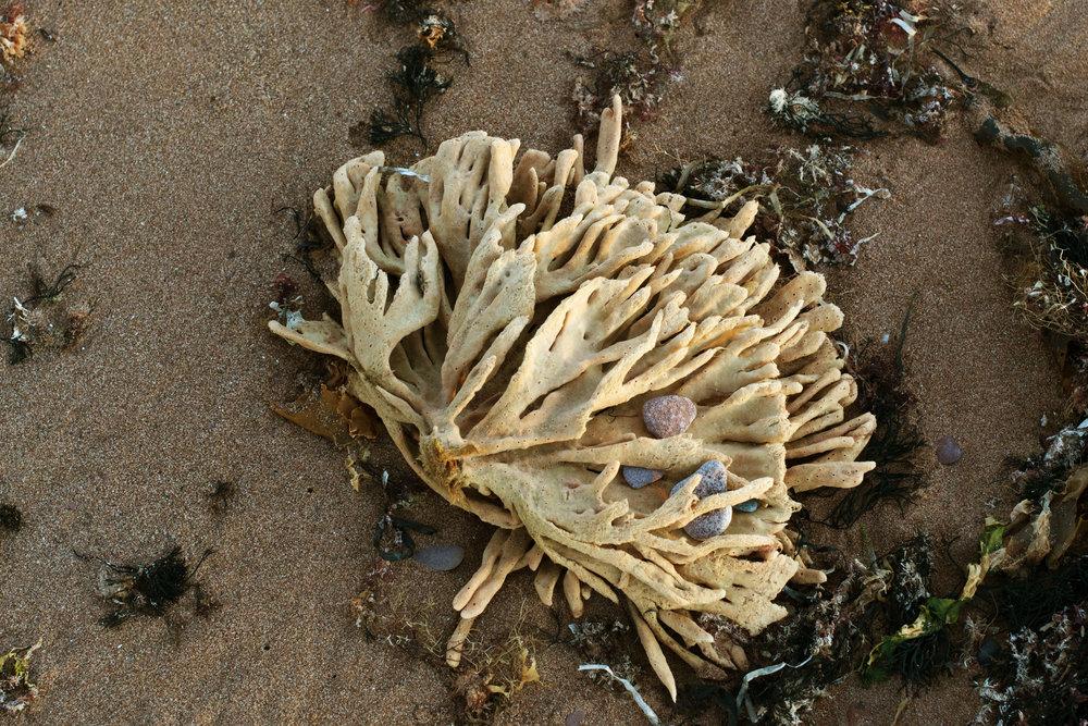 north-cape-seaweed-beauty.jpg