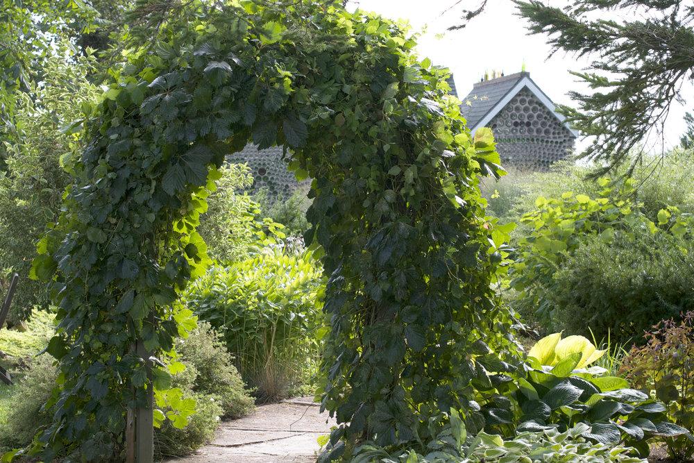 ivy-archway.jpg