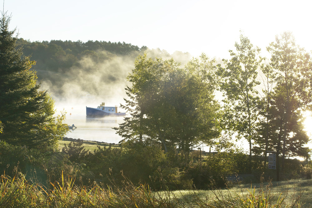 foggy-morning-chester-basin.jpg