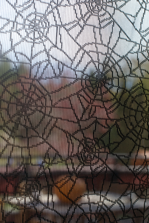 spider-web-window-close-up.jpg