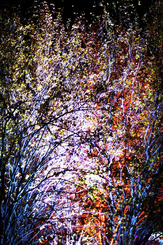 unbelieveable-fall-leaves-beauty.jpg