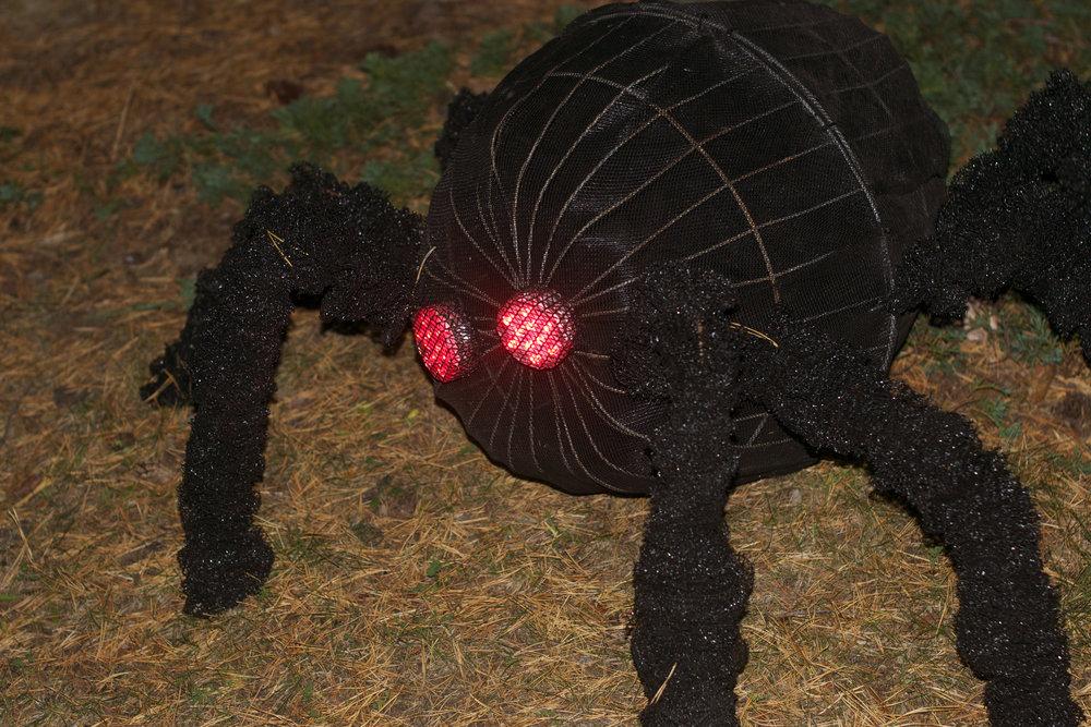 spider-at-night.jpg