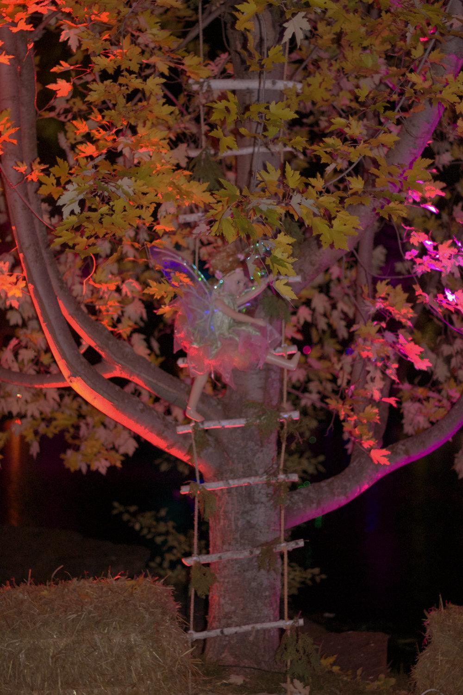 fairy-climbing-a-tree.jpg