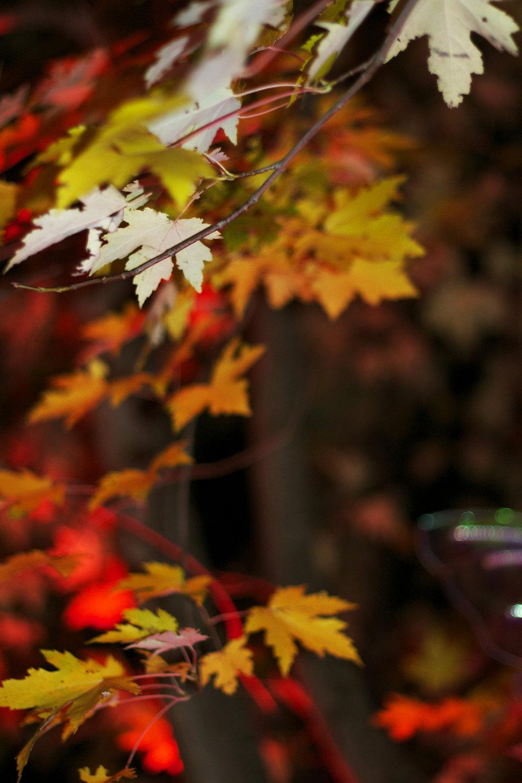 fall-leaves-lit-up.jpg