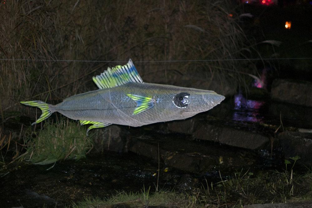 silver-fish.jpg